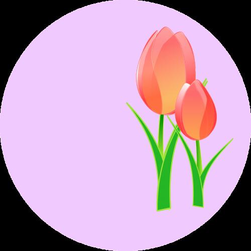 tulpės,gėlė,rožinis,tulpė,palaima,lengvesnė nuotaika,svogūnas,tulip-manija,tulpių festivalis,nemokama vektorinė grafika