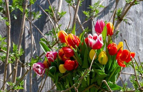tulips  colorful  tulip bouquet
