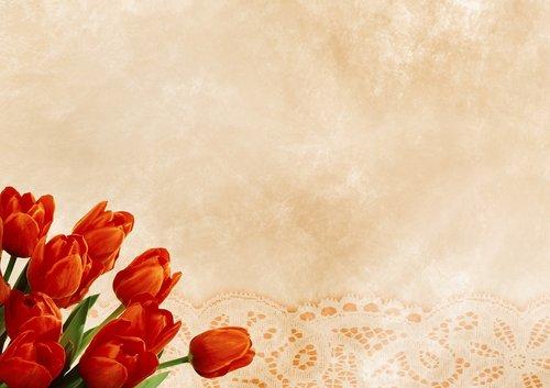 tulips  pattern  background