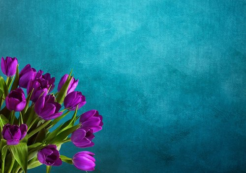 tulips  background image  bouquet