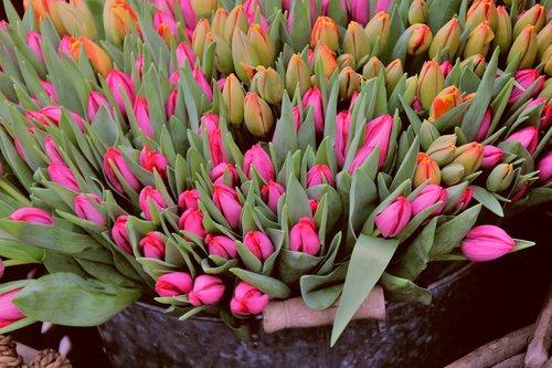 tulips  market  market stall