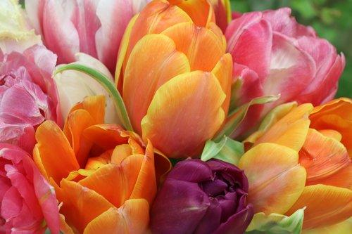 tulips  bright  bouquet