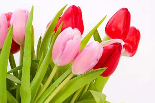 tulips bouquet spring
