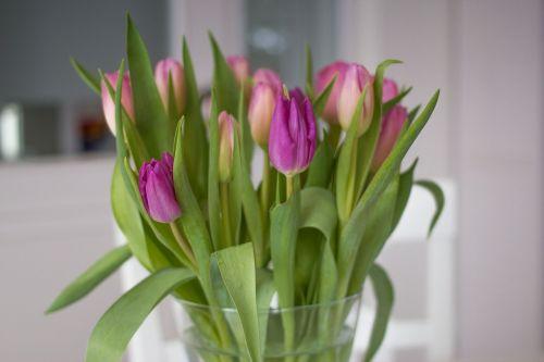 tulpės,gėlės,pavasaris,rožinis,violetinė,žydėti,tulpių puokštė,vazos,spalvinga,romantiškas,Valentino diena