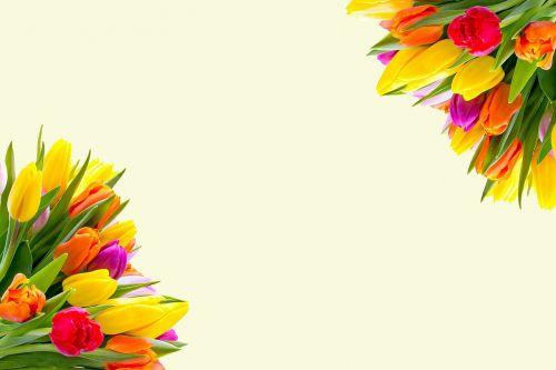 tulpės,gėlės,pavasaris,gėlių,pavasario gėlės,gėlių puokštė,gėlių puokštė,žydėti,gėlių puokštė,gėlių fonas,krūva,raudona,žydi,sienos,geltona,oranžinė,dizainas,puokštė,romantiškas,dekoratyvinis,kortelė,šablonas,kvietimas,nemokamas vaizdas