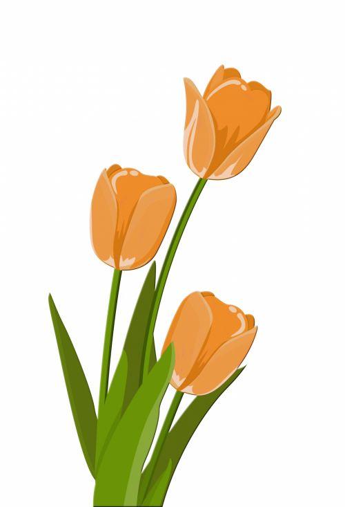 Tulips Illustration Clipart