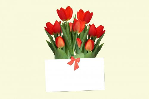 Tulips With Gift Card