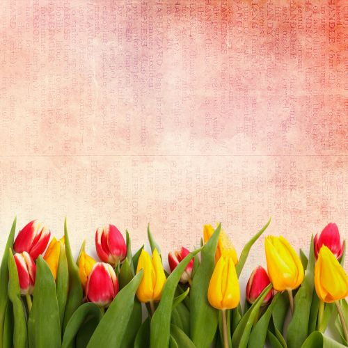free photos floral tulips wallpaper vintage search download