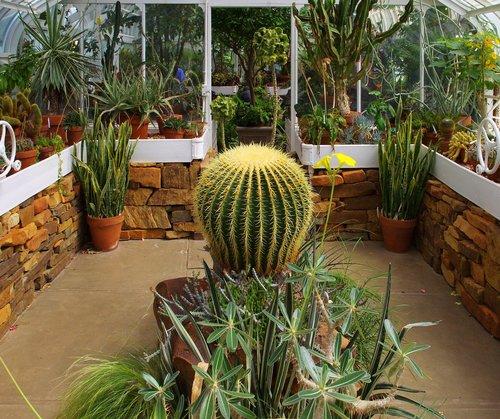 tulsa victorian conservatory  conservatory  plants