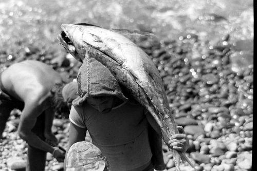 tuna fish frisch