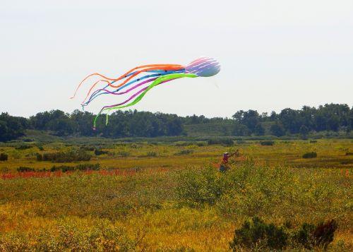 tundra autumn kite