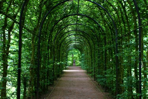 tunnel tunnel of plants promenade