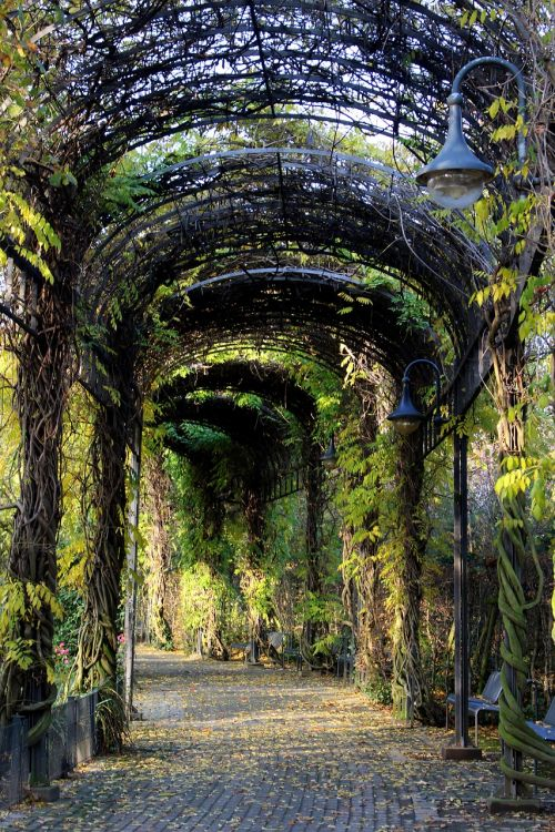 tunnel plant tunnel away