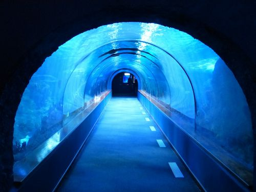 tunnel underwater aquarium