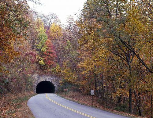 tunnel foliage fall