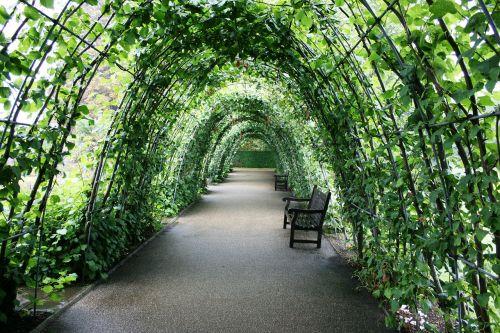 tunnel of plants garden tunnel green