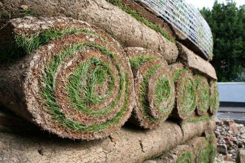turf grass green