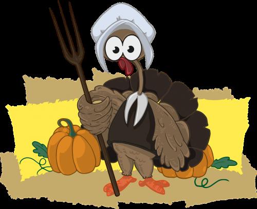 turkey farmer animal