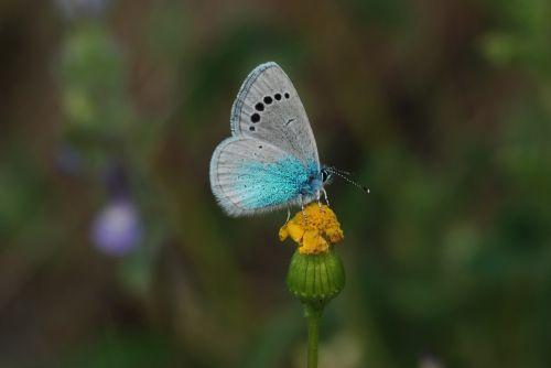 turkey ankara butterflies