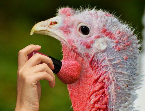 turkey color brush