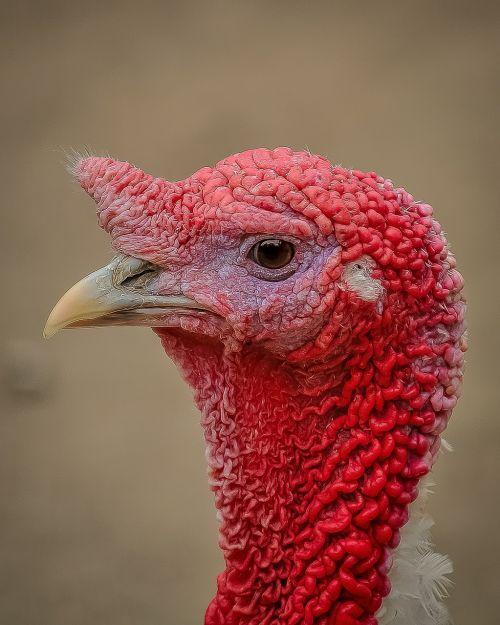 turkey profile picture