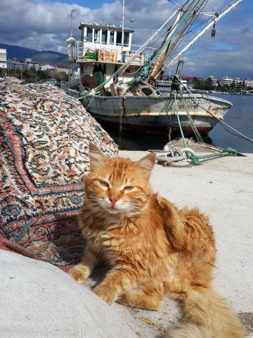 turkey izmir marine