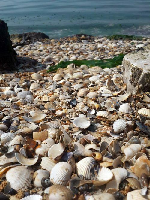 sea shell turkey izmir