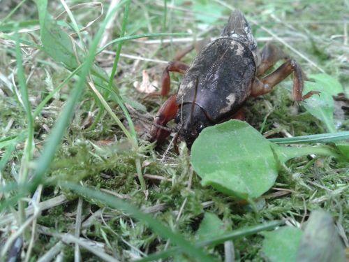 turkuć podjadek insect
