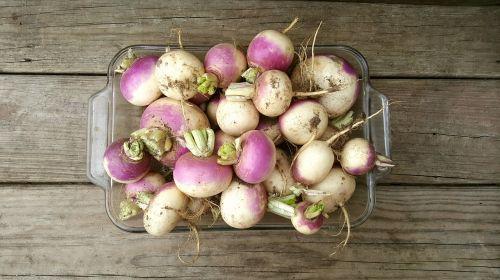 turnip wood farm
