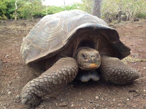 turtle tortuga tortoise