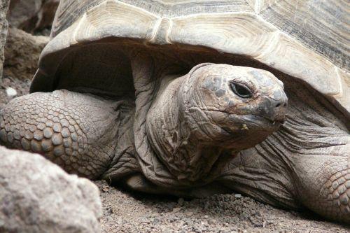 turtle tortoise close