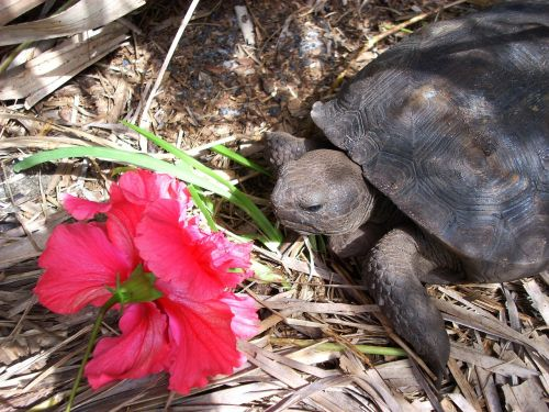turtle box turtle land turtle