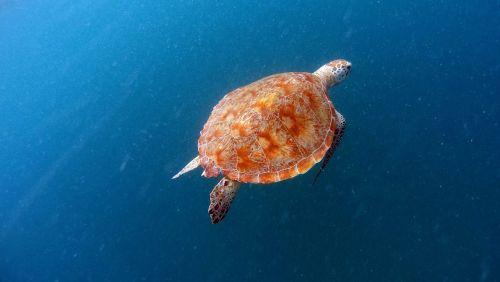 turtle sea turtle sea turtle