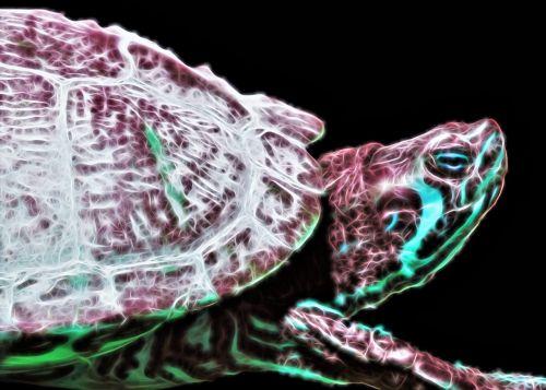 turtle matted amphibian