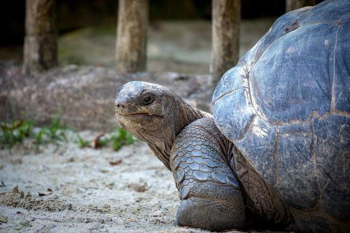 turtle slowly animal