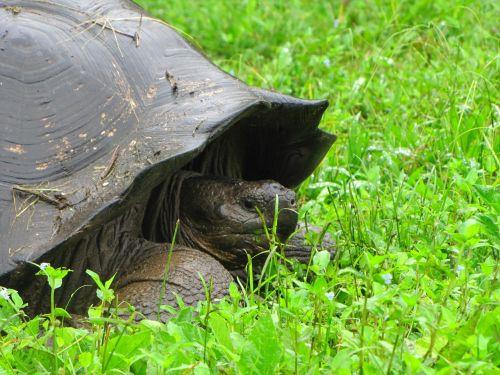 turtle galapagos island nature