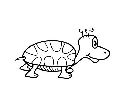 turtle vector png