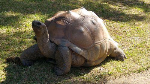 turtle nature animal