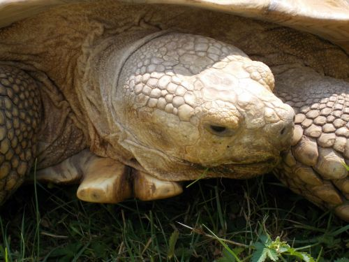 turtle zoo frightening