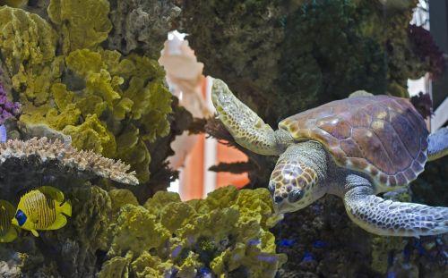 turtle turtle pool aquarium