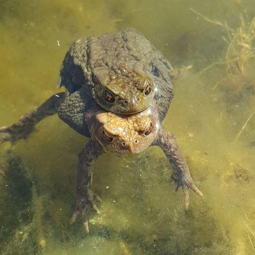 turtle pond habitat