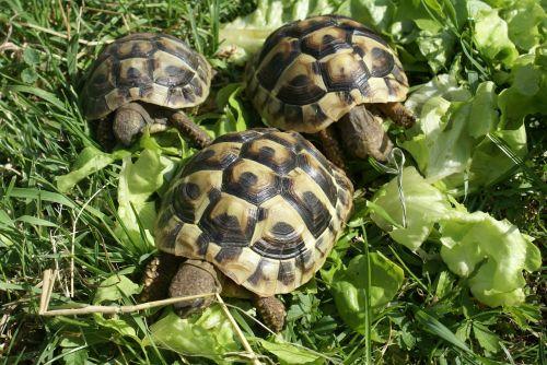 turtle greek turtles turtles