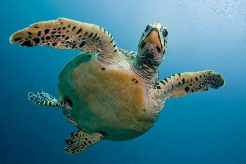turtle tortoise sea