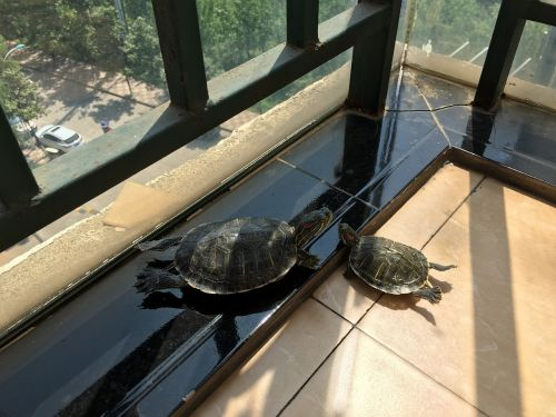turtle pet relax