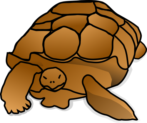 turtle shell large