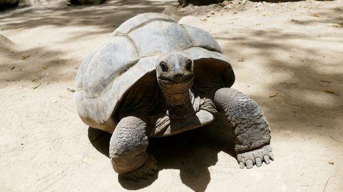 turtle seychelles beach