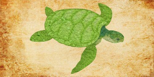 turtle turtle vintage vintage