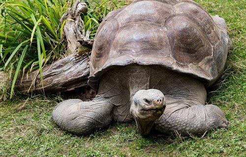 turtle  animal  animal world