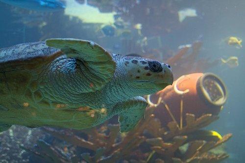 turtle  fish  aquarium