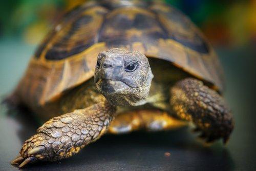 turtle  head  slowly